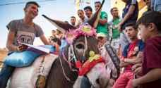 """""""كليوباترا"""" تتوج بلقب ملكة جمال الحمير في المغرب - فيديو"""