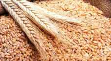 وزير التموين: مصر لديها احتياطي من القمح يكفي حتى 7 شباط 2020