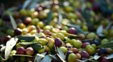 الزراعة تقرر فتح معاصر الزيتون في 15 تشرين الأول