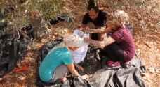 شجر الزيتون في فلسطين قصة مقاومة شاهدة على همجية الاحتلال - فيديو