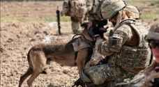"""""""كلب مجهول"""" بطل العملية الأمريكية في تصفية البغدادي"""