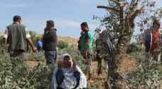 المستوطنون يهاجمون مزارعين فلسطينيين في حوارة