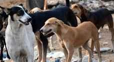 غضب من فيديو لقتل كلاب ضالة مسالمة من قبل بلدية جرش.. شاهد