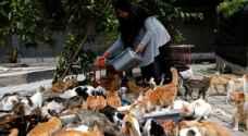 إندونيسية تحول منزلها إلى ملجأ قطط