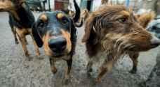 """كلاب """"تنهش"""" رضيعا داخل مستشفى في الهند"""