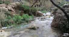 الأمطار الغزيرة تُمهّد لتفجر الينابيع في عجلون