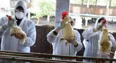 سلالتان إحداهما شديدة العدوى.. ظهور إنفلونزا الطيور في السعودية وفيتنام