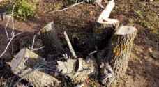 ضبط 3 اعتداءات لتقطيع الاشجار من الغابات