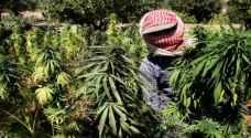 جدل في لبنان بعد موافقة البرلمان على زراعة الحشيش