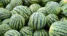 الأمانة: بدء استقبال طلبات منح تصاريح معرشات بيع البطيخ إلكترونياً