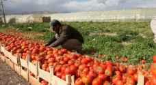 الزراعة تدعو المزارعين لاتخاذ تدابير للتعامل مع موجة الحرارة