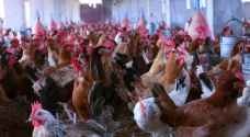 """علماء أوبئة: كورونا مجرد """"قزم"""" بالنسبة لفيروس قادم من مزارع الدجاج"""