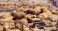 الحكومة تحدد شروطا لأماكن بيع الأضاحي في الأردن