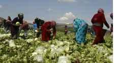 وزير العمل: العامل الأردني لا يستطيع منافسة الوافد في الزراعة