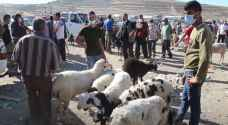 إقبال ضعيف على الأضاحي في فلسطين رغم انخفاض الأسعار - فيديو