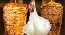 رحلة الدجاجة من المزرعة إلى سيخ الشاورما - فيديو
