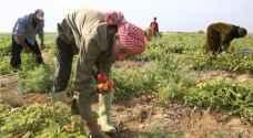 مجلس الوزراء يمدد تخفيض رسوم التصاريح الزراعية حتى نهاية أيلول المقبل