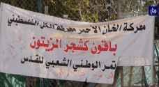 بدو رأس التينة يتصدون لاقتحام مستوطنين يسعون لإنشاء بؤرة استيطانية - فيديو