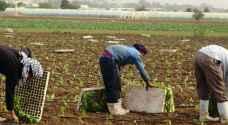 العمل: إجراءات تقييمية لرفع نسبة مشاركة الأردنيين في هذا القطاع الزراعي