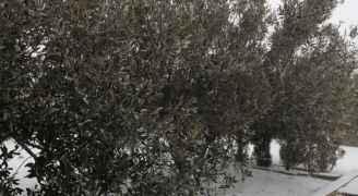 تساقط الثلوج في مرتفعات الشراه جنوب الأردن صباح الأحد 9-2-2020