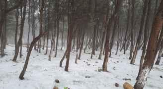 الثلوج في منطقة البصيرة في محافظة الطفيلة