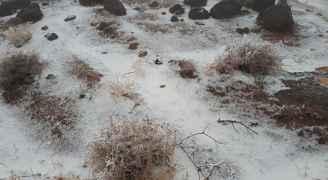تساقط الثلوج في الطفيلة