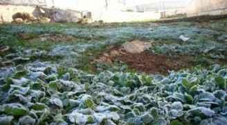 """""""وادي الأردن"""" تحذر المزارعين من آثار تكون الصقيع"""