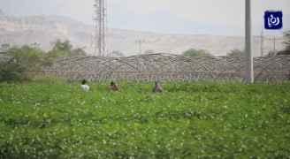 تحذير للمزارعين في الأردن من المنخفض الجوي