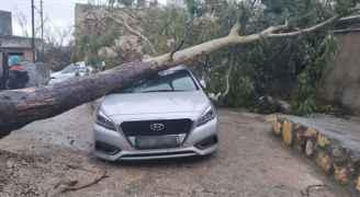 سقوط شجرة ضخمة على مركبة في أبو نصير.. صور