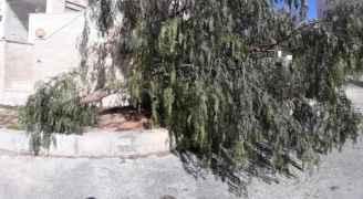 سكان عمارة بالزهور يطالبون الأمانة بإزالة شجرة سقطت خلال المنخفض الأخير.. صور