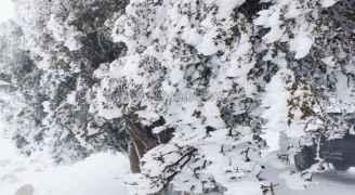 الثلوج تغطي مرتفعات جنوب الأردن.. فيديو