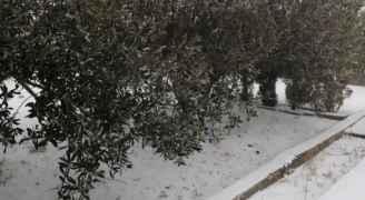 تساقط الثلوج في جنوب الأردن.. فيديو وصور