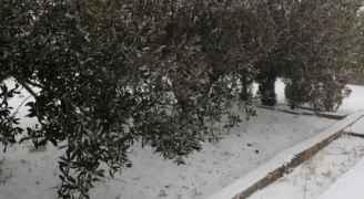تجدد تساقط ثلوج خفيفة في بعض أحياء العاصمة عمان