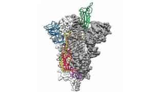 """أول خريطة """"ثلاثية الأبعاد"""" لفيروس كورونا"""