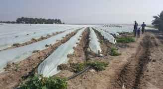 أضرار جسيمة المزارعين الفلسطينيين بسبب المنخفض الجوي