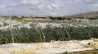 الحكومة تقرر تشكيل لجان لحصر الاضرار التي تعرض لها المزارعين بسبب المنخفض