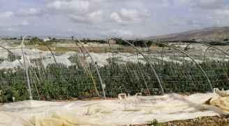 مزارعو الأغوار يرفضون عرض وزارة الزراعة بفتح باب القروض لهم