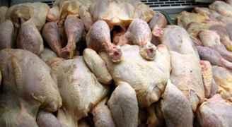 """مصدر لـ """"رؤيا"""": إتلاف كميات كبيرة من الدجاج الفاسد في صافوط - فيديو"""