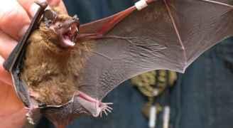 الصحة العالمية تحذر من انتقال أمراض جديدة من الحيوانات للبشر