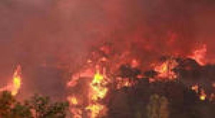 احتراق 50 دونما من الأشجار الحرجية في دبين