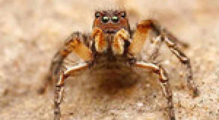 الجديد في الطب النفسي..العلاج بالعناكب والقبور