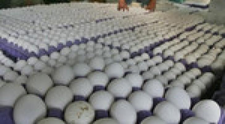 إرتفاع أسعار بيض المائدة 30%