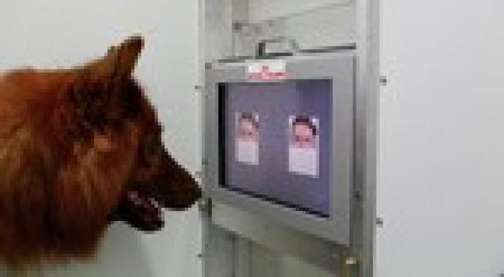 علماء: الكلاب تتمكن من التمييز بين الوجوه الشريرة والخيرةت