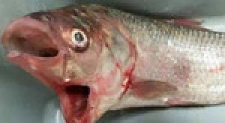 أسترالي يصطاد سمكة بفمين