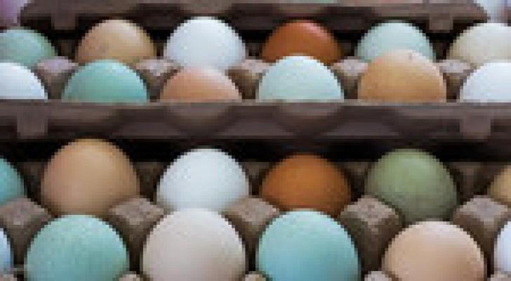 بيض ياباني بطعم ورائحة الفاكهة