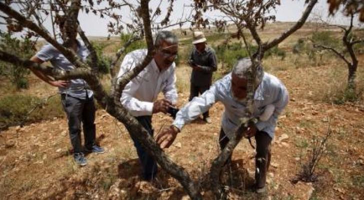 منظمة إسرائيلية تتهم الجيش بالتستر على تجاوزات الجنود