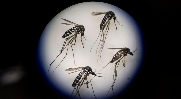 توقعات بانتهاء عدوى فيروس زيكا خلال عامين أو ثلاثة