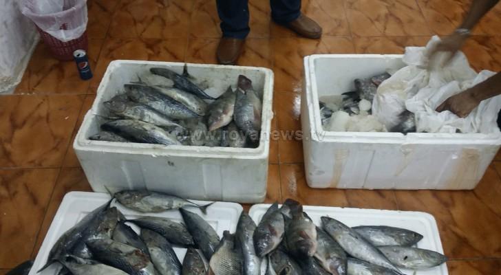 ضبط 300 كيلو أسماك فاسدة في اربد .. صور