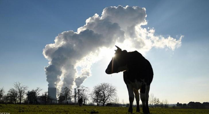 دول عدة رصدت استثمارات مهمة للطاقة المتجددة