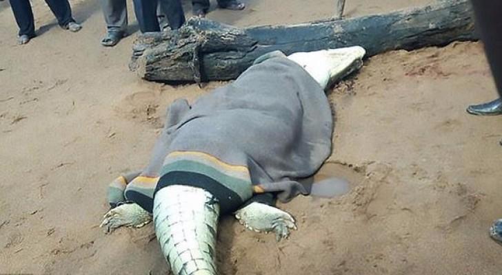 الأهالي أطلقوا النار على التمساح ووجدوا صبيهم بداخله